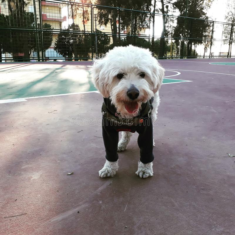狗 免版税库存图片