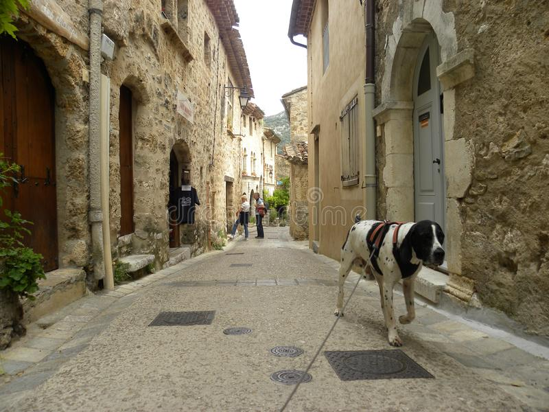 狗braque d'奥韦涅在圣徒guilhem le沙漠,herault的,朗格多克,法国一个村庄 库存照片