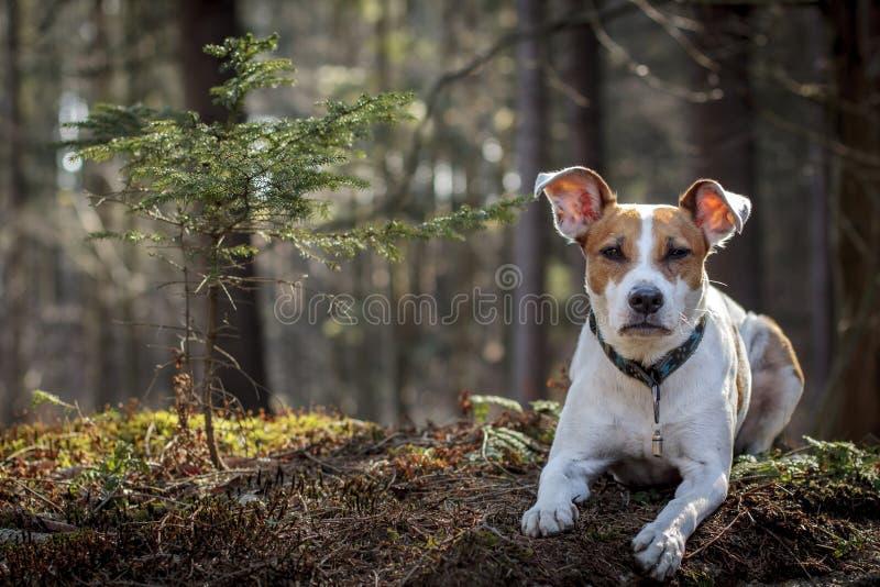 狗portret在森林里 免版税图库摄影