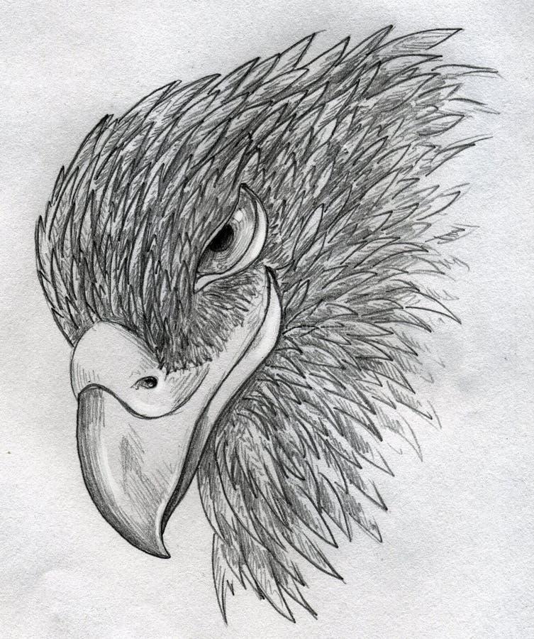 狡猾的老鹰 皇族释放例证