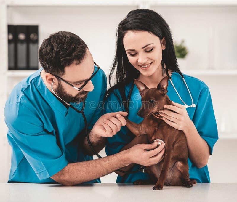狩医诊所的年轻兽医 库存图片