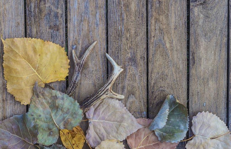 狩猎期:鹿鹿角和干燥秋叶 免版税库存照片