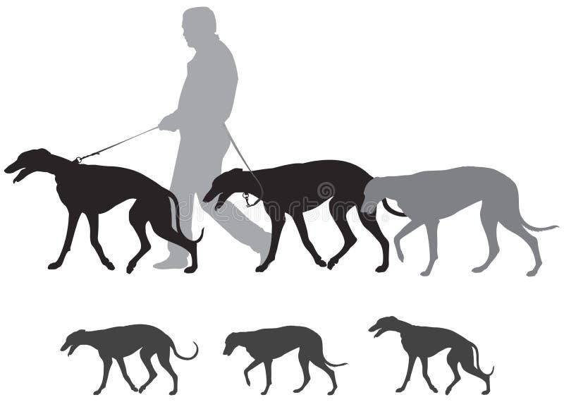 狩猎猎犬步行,灵狮步行 库存例证