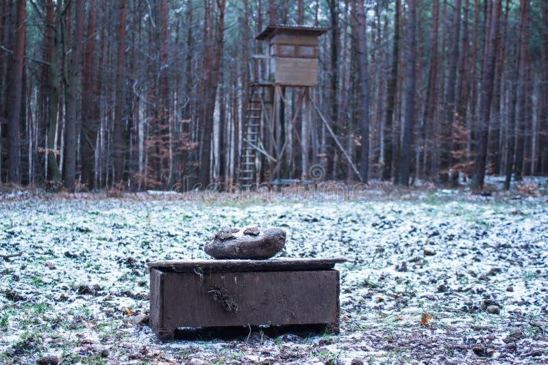 狩猎观察站在冬天 库存图片