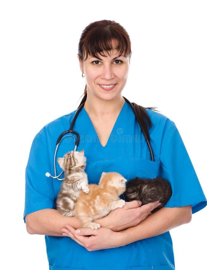 狩医拿着三只小猫 背景查出的白色 免版税库存图片