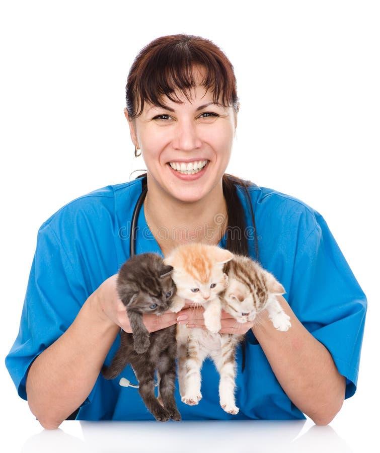 狩医拿着三只小猫 背景查出的白色 图库摄影