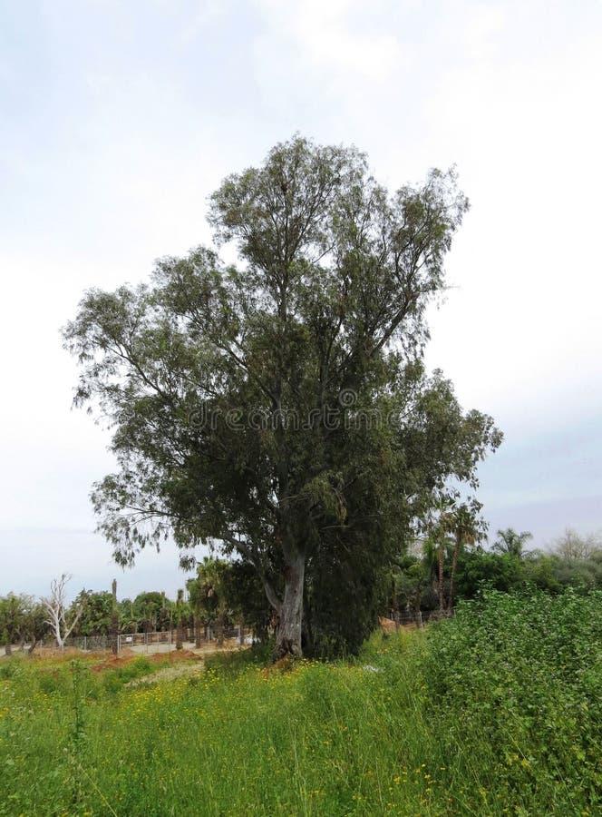 独奏绿色树 免版税图库摄影