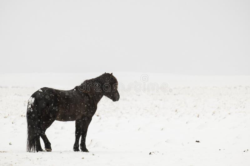 Download 独奏黑冰岛的马 库存图片. 图片 包括有 机会, 末端, 内存, 背包, 地产, 激情, 甚而, 云彩, 启发 - 62527437