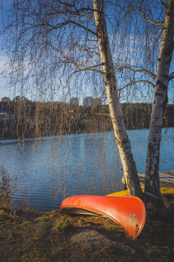 独木舟和桦树 免版税图库摄影