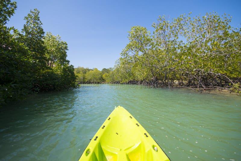 从独木舟的美洲红树景色 免版税库存图片
