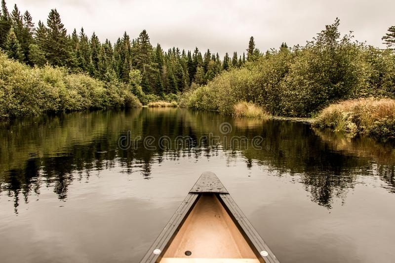 独木舟鼻子Calm平安的相当湖阿尔根金族公园,安大略加拿大树反射海岸线杉树森林岸线 免版税库存图片