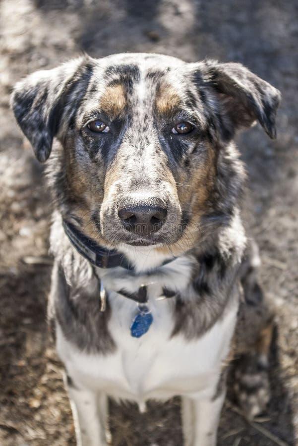 独特的色的狗 免版税图库摄影