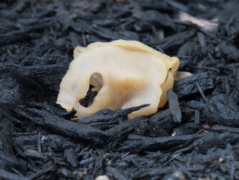 独特的Tan胶凝体真菌 图库摄影