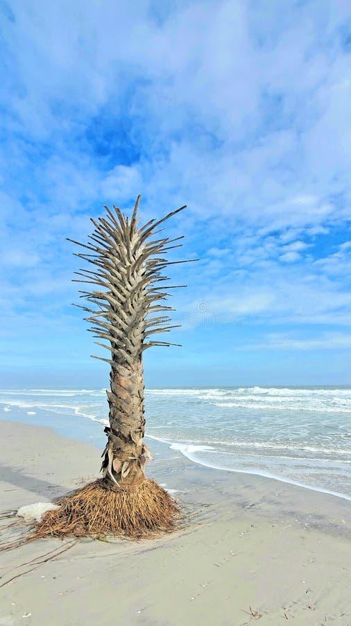 独自在海滩上 库存图片