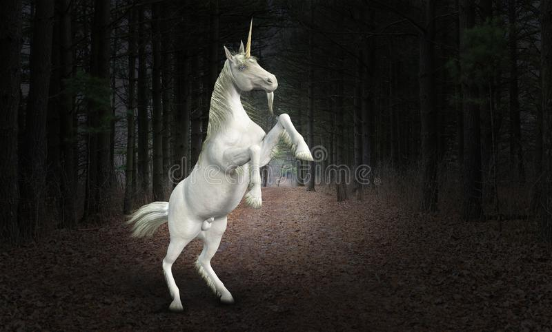 独角兽马,自然,野生生物,森林 图库摄影
