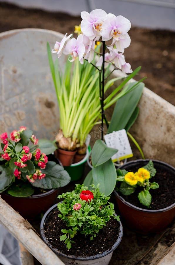 独轮车的不同的开花植物 图库摄影