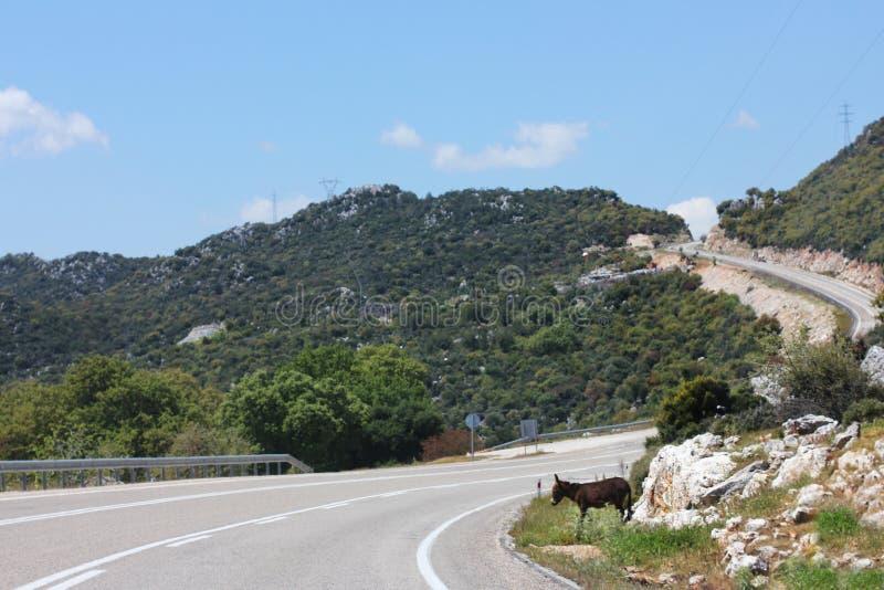 狭窄的山柏油路 驴穿过路 库存图片