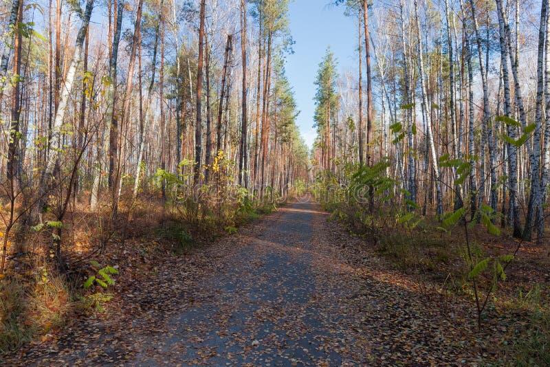 狭窄的柏油路在森林里晚秋天 库存图片