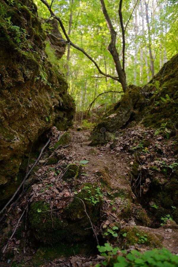 狭窄的石段落通过绿色森林 库存照片