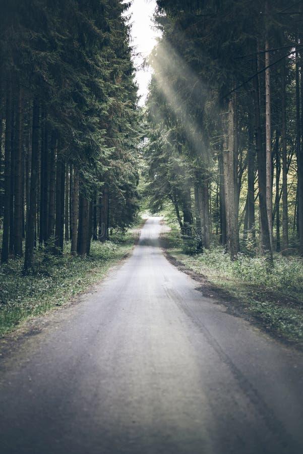 狭窄的空的森林公路 库存图片