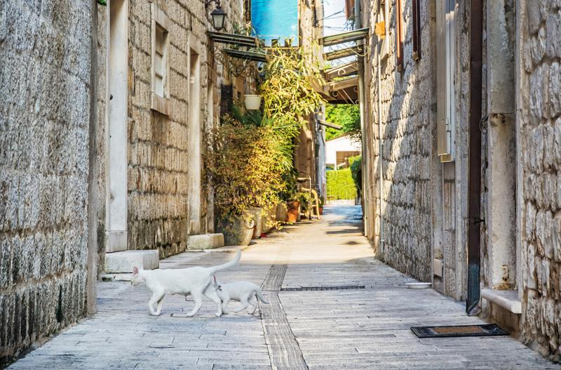 狭窄的街道在历史的特罗吉尔,克罗地亚 库存图片