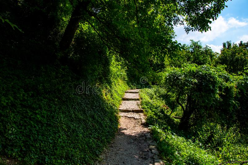 狭窄的足迹通过森林 免版税库存照片