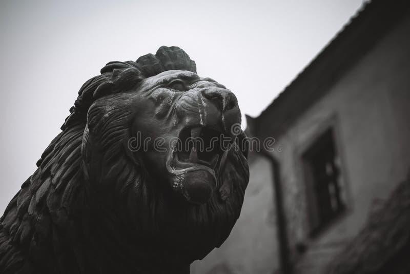 狮子咧嘴面孔,雕象 库存图片