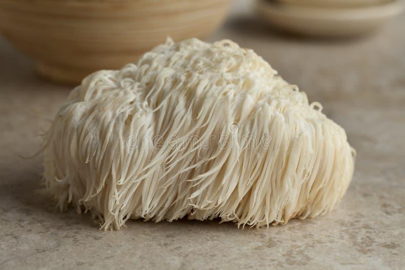 狮子鬃毛蘑菇s 免版税库存照片