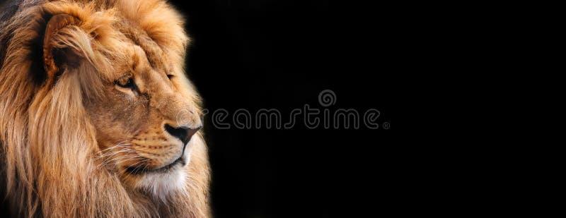狮子 图形设计,与狮子的特写镜头的标签 免版税库存照片