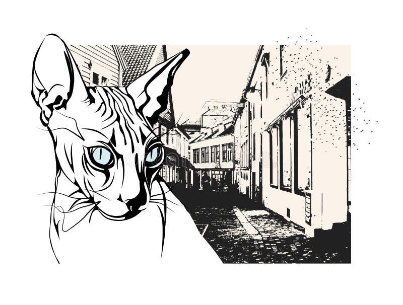 狮身人面象猫在老欧洲城市 免版税库存照片