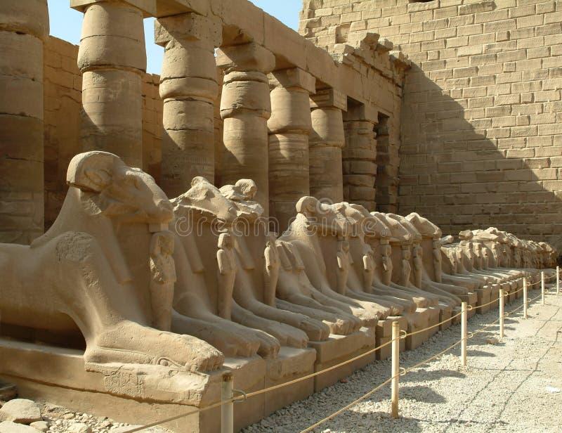 狮身人面象胡同与绵羊的朝向,不用人,西比,联合国科教文组织世界遗产名录站点,埃及 免版税库存照片