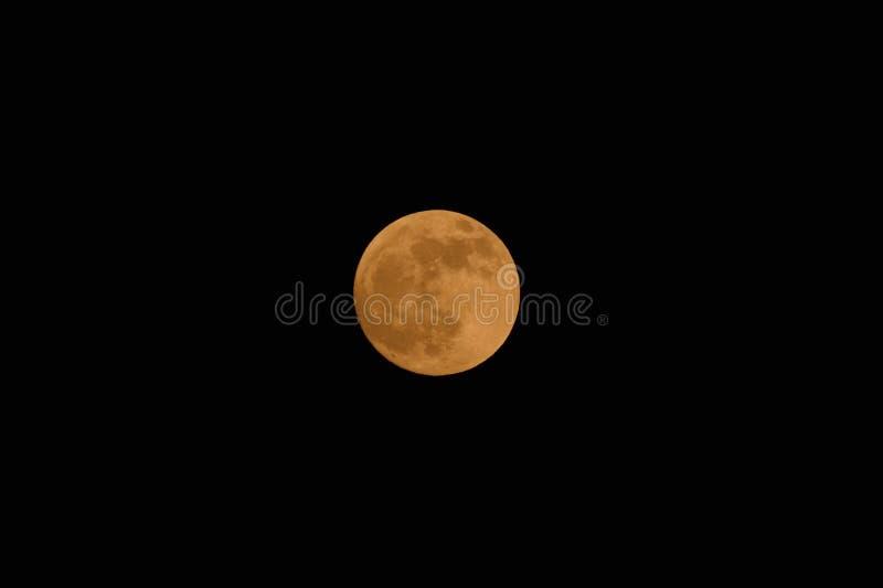 狼月亮,血液月亮,超级月亮 免版税库存照片