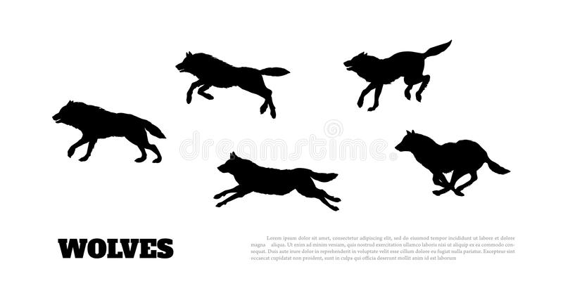 狼群黑剪影在白色背景的 皇族释放例证