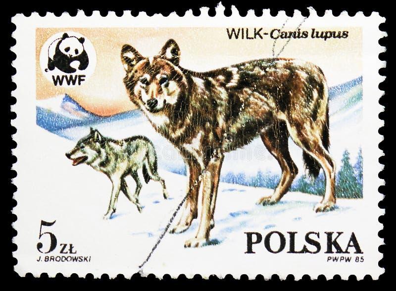 狼(天狼犬座),世界野生生物资金serie,大约1985年 库存照片