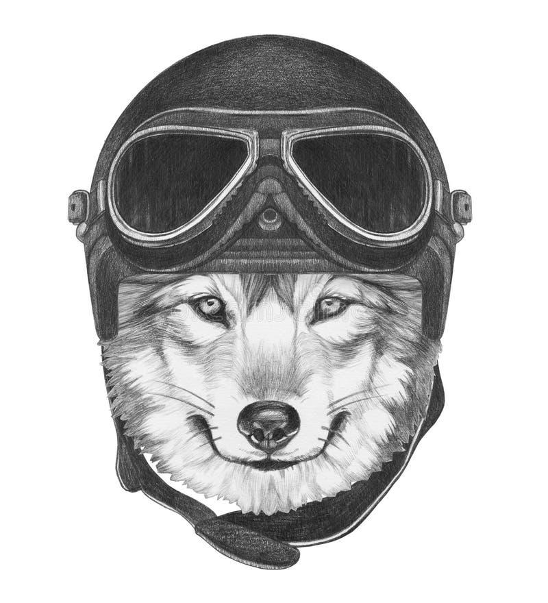 狼画象与葡萄酒盔甲的 库存例证