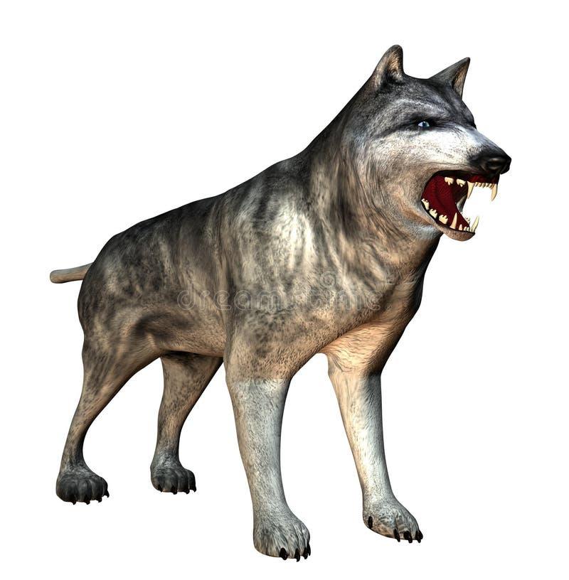 狼 向量例证