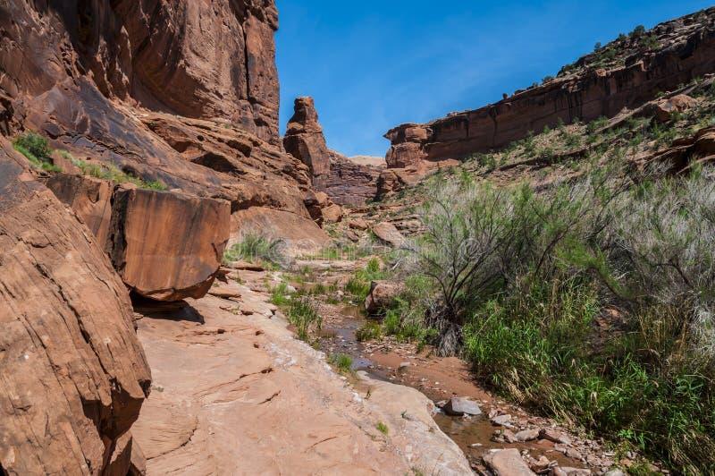 猎人峡谷供徒步旅行的小道默阿布犹他 免版税库存图片