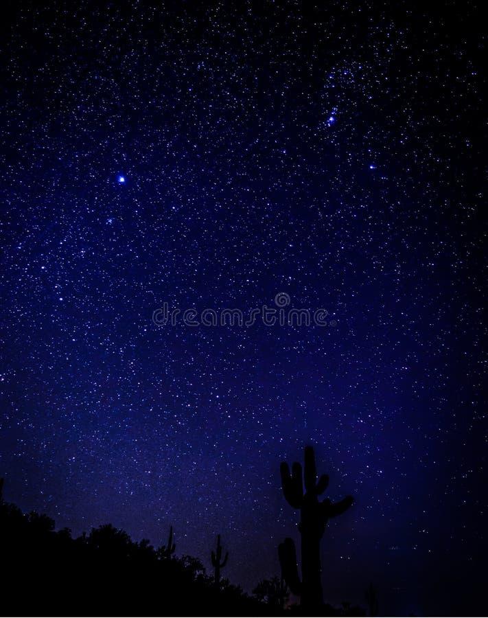 猎户星座和Sirus的constelation在一个巨型柱仙人掌仙人掌的天狼星上升在亚利桑那 免版税库存图片