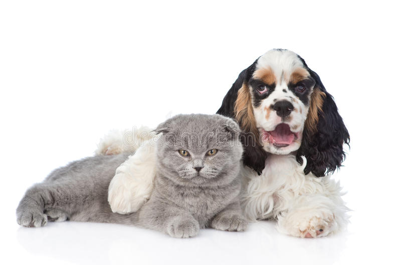猎犬小狗拥抱幼小小猫 查出在白色 免版税图库摄影