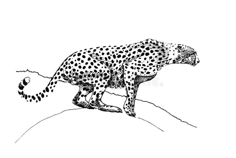 猎豹手拉的例证原物,没有辨别目标图片