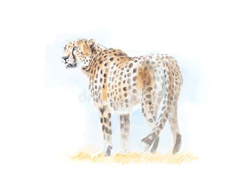 猎豹详细的水彩绘画以传染媒介格式 库存图片