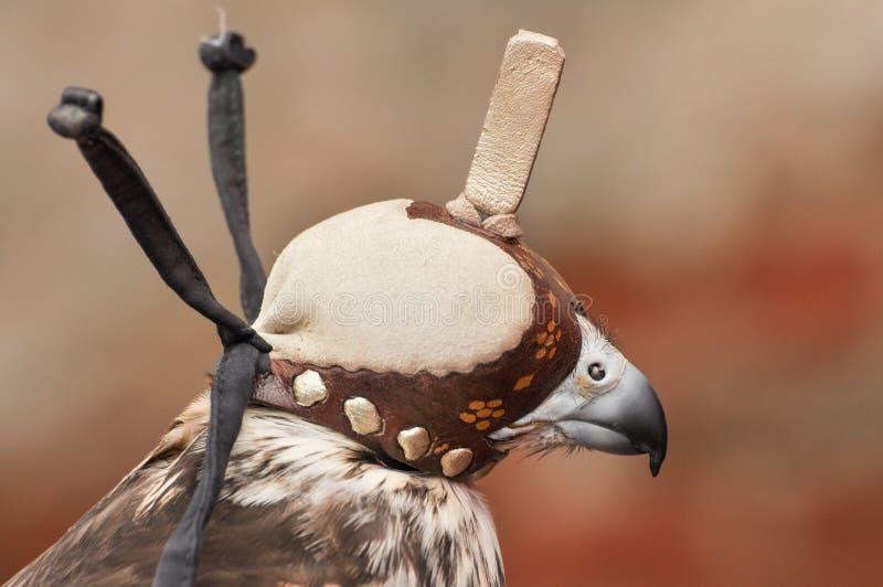 猎鹰训练术敞篷 免版税库存图片