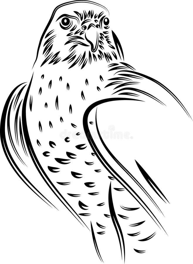 猎鹰 向量例证