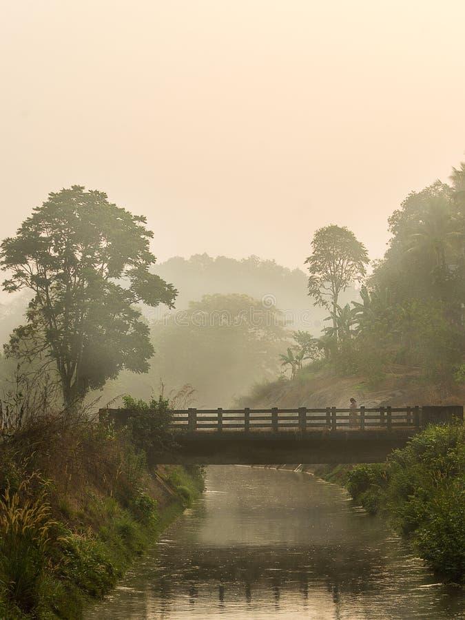 猛击薄雾的早晨光  库存照片