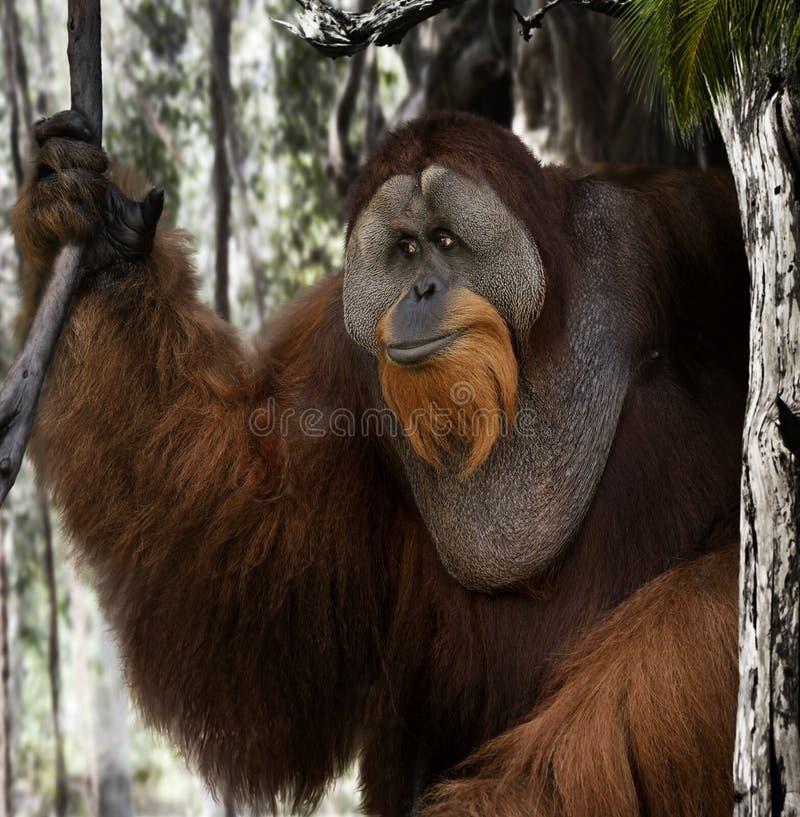 Download 猩猩画象 库存照片. 图片 包括有 纵向, 本质, 特写镜头, 敌意, 猴子, 室外, 野生生物, 结构树 - 30330264