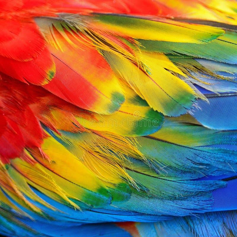 猩红色金刚鹦鹉羽毛 库存图片