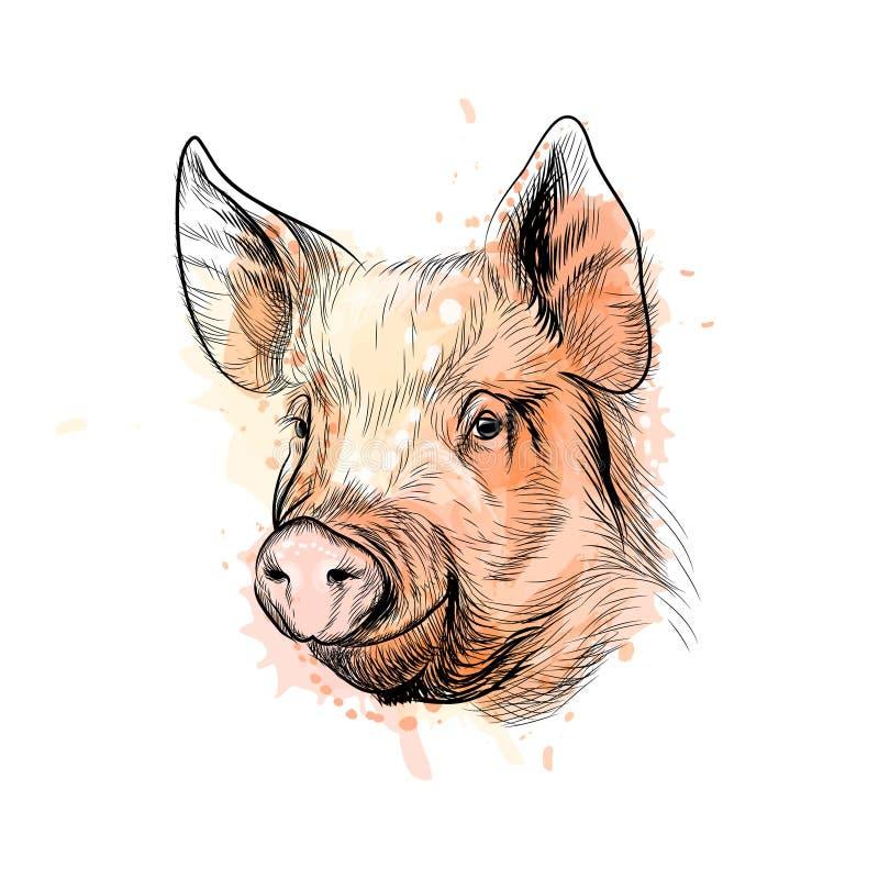 猪头的画象 中国黄道带标志年猪 库存例证