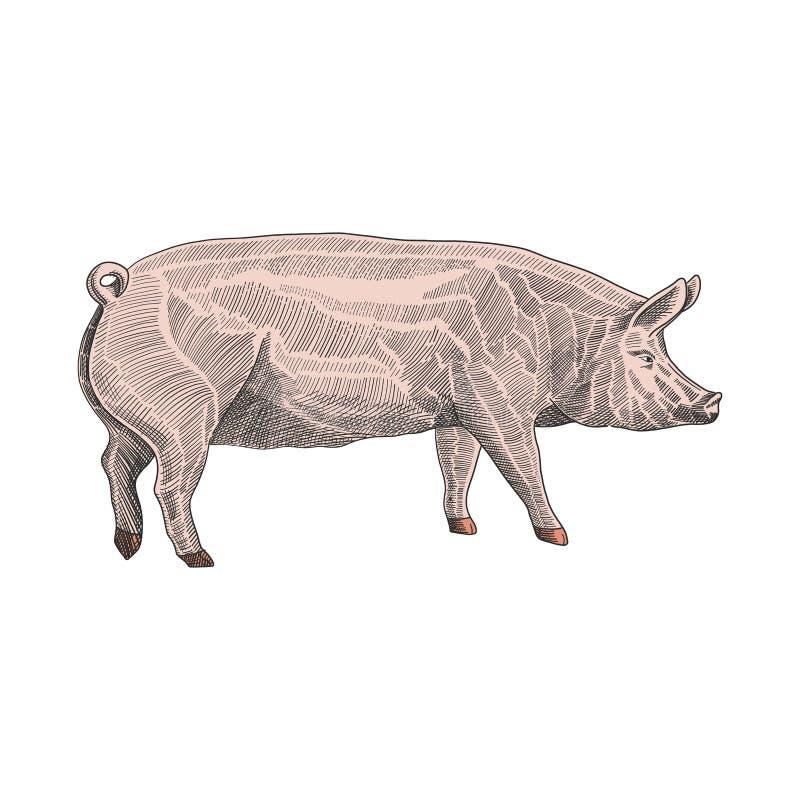 猪手中拉长的图表样式的传染媒介例证,五颜六色的刻记的略图例证 皇族释放例证