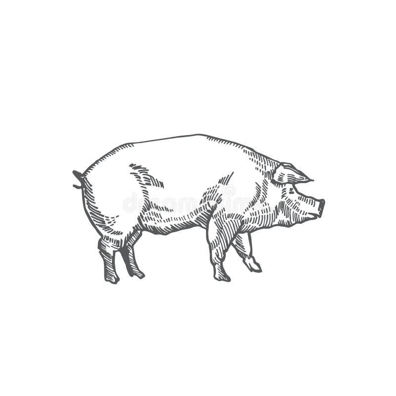 猪手拉的传染媒介例证 抽象家畜剪影 板刻样式图画 皇族释放例证