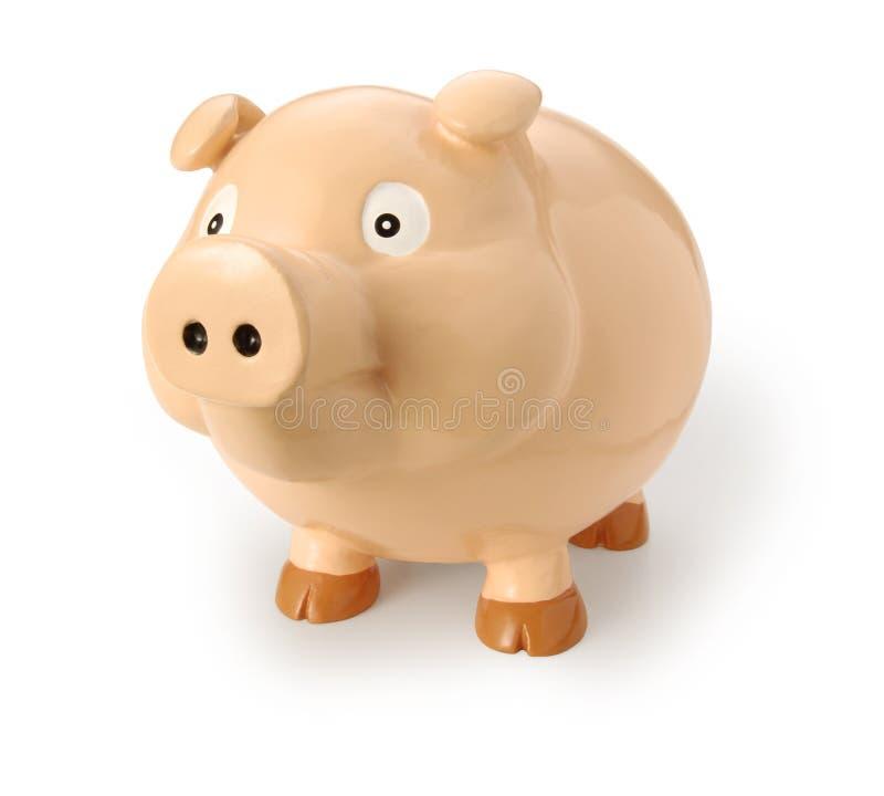 猪猪 库存图片